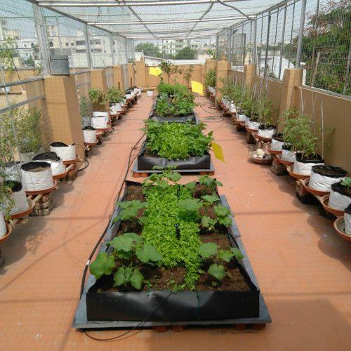 Roof Top Gardening Bags